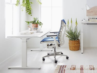 Renew Sit to stand Desk
