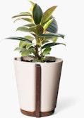 Base Planter