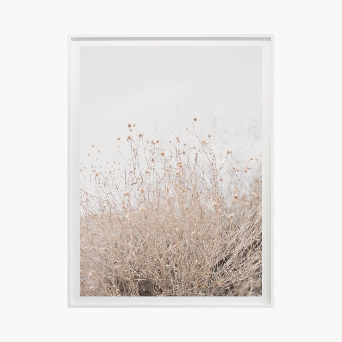 """""""Desert Flora No. 0996"""" by Cas Friese"""