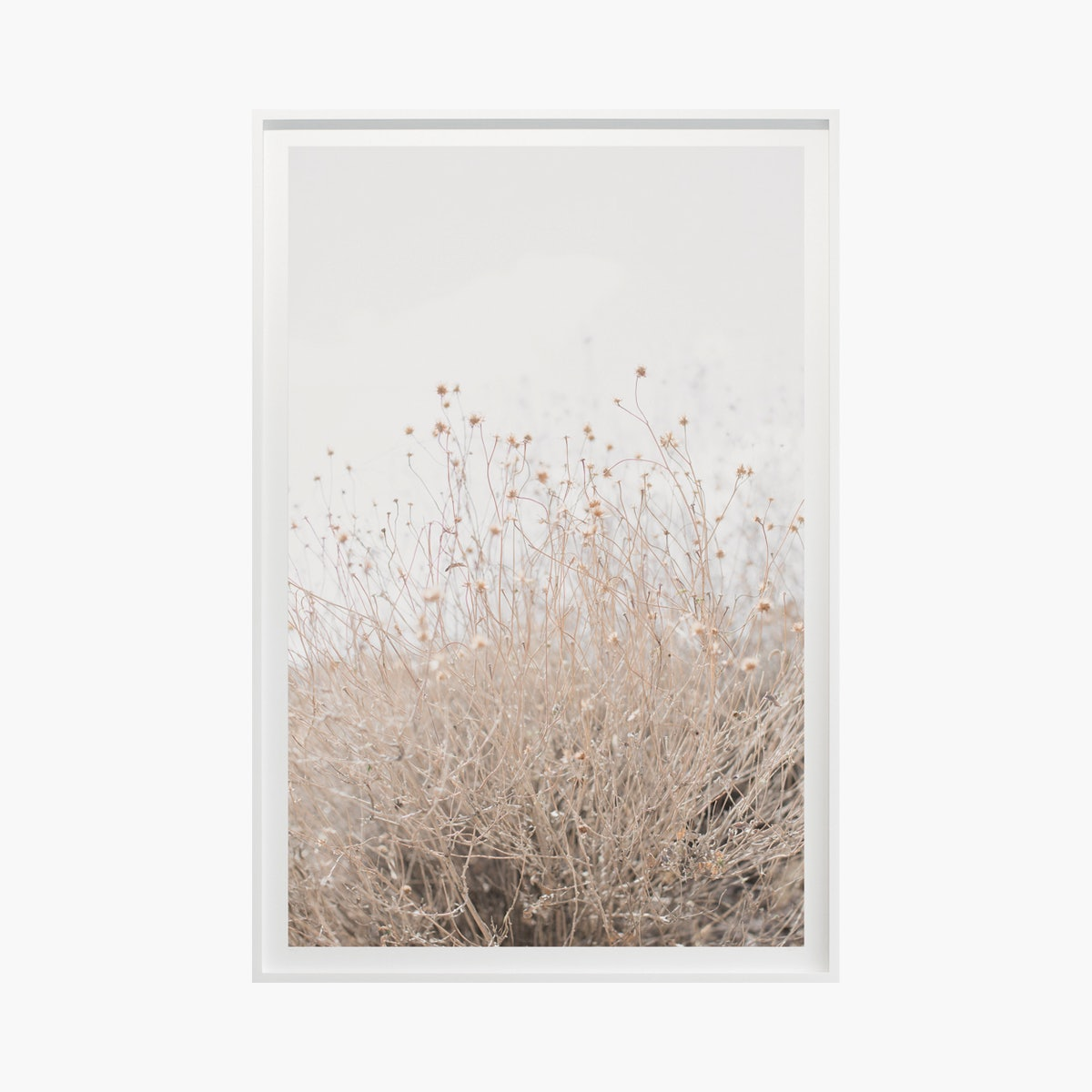 """Desert Flora No. 0996"" by Cas Friese"