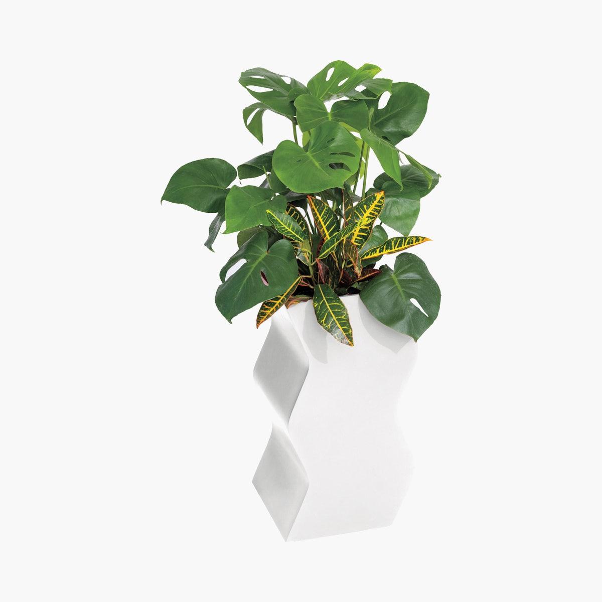 Curvy Planter